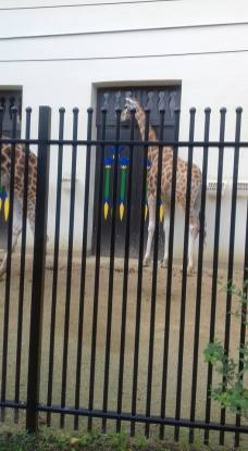 Zoo 20 augustus 2016 (18)