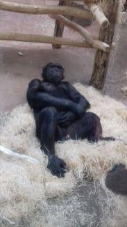 Zoo 20 augustus 2016 (28)