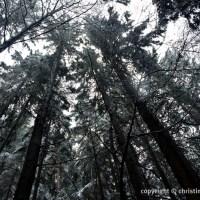 Ostersonntag im Wald