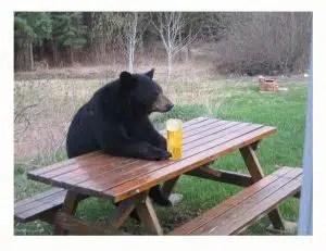 Familia de Osos beben 100 latas de Cerveza