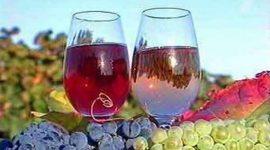 Вино признано продуктом питания