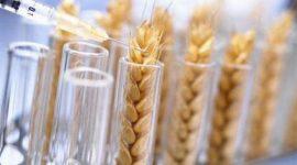 Мировая площадь сева генномодифицированных культур рекордно выросла