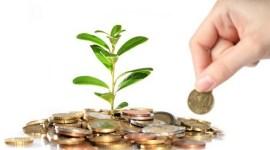 AIPA начало прием заявлений на получение субсидий