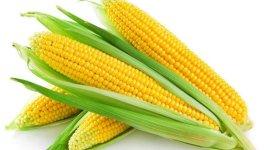 USDA: Прогноз мирового производства кукурузы увеличен на 9 млн тонн