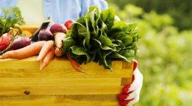 В Молдове повысят субсидии для экологической продукции