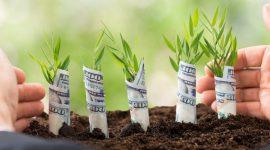 AIPA a dat start Campaniei de recepționare a cererilor de subvenționare 2017
