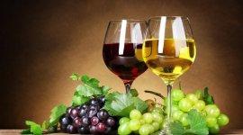 Наука о винограде и вине готовится к возвращению к «нулевому» варианту