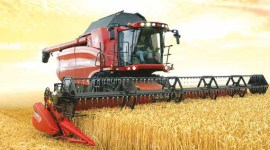 Итоги уборки зерна первой группы: на прошлогоднем уровне