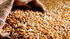 Прогноз мирового производства зерновых в 2017/18 МГ повышен на 6 млн тонн
