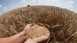 ФАО: ЗЕРНО ДОРОЖАЕТ ЧЕТВЕРТЫЙ МЕСЯЦ ПОДРЯД Индекс цен на зерновые ФАО растет уже четвертый месяц подряд и в апреле поднялся еще на 1,7%.
