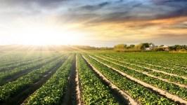 Правительство решило: иностранцы и впредь не смогут владеть сельхозугодьями