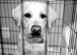 perro-en-jaula