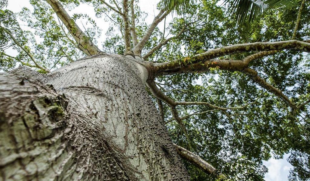 Anuncia Bolsonaro creación de un consejo para proteger a la Amazonia