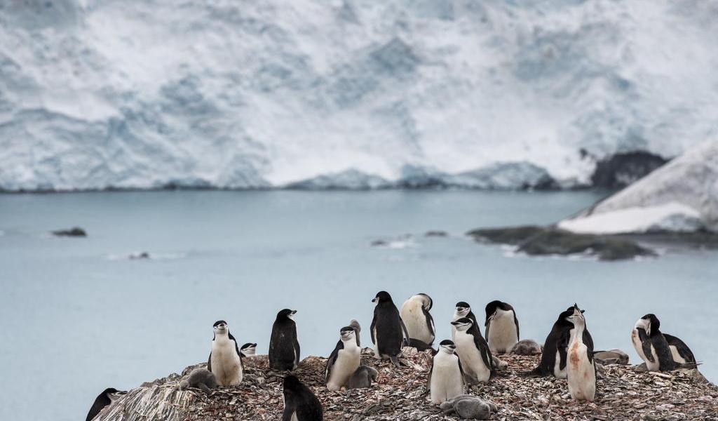 Se deben verificar altas temperaturas en la Antártida: ONU