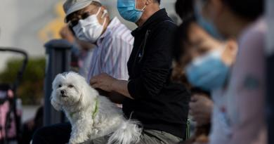 Confirman primer caso de contagio 'humano a animal' del COVID-19 en Hong Kong