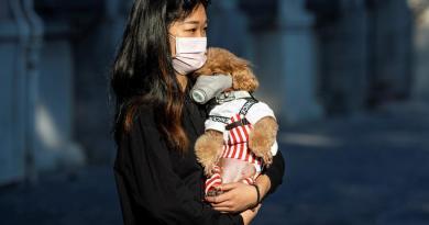 Perros y gatos no pueden transmitir el coronavirus a humanos, señalan expertos