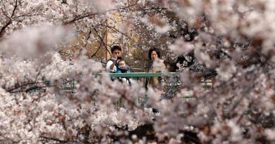 Suspende Tokio las visitas a sus afamados cerezos en flor por el COVID-19