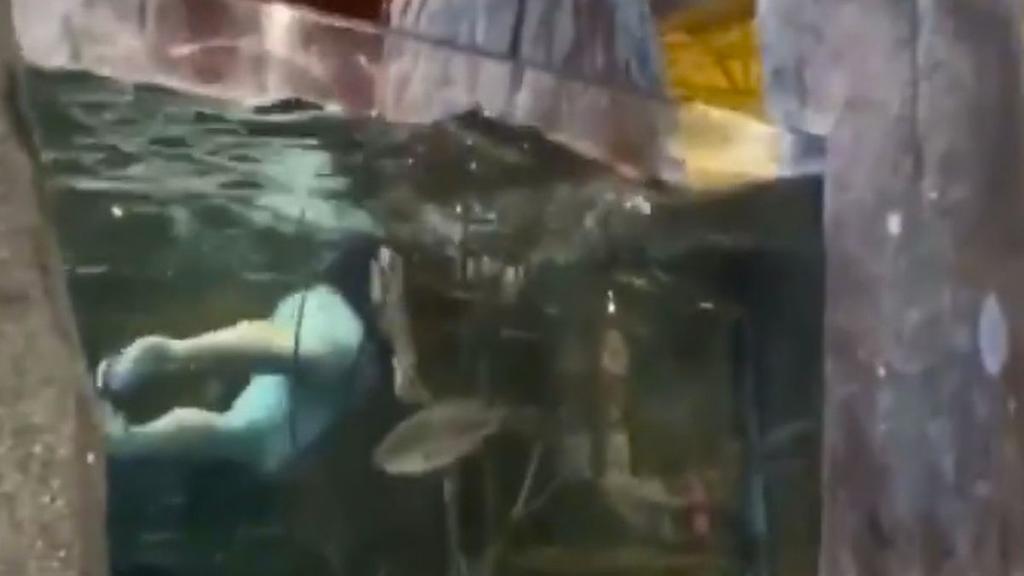 Arrestan a hombre que nadó en acuario de tienda en EUA