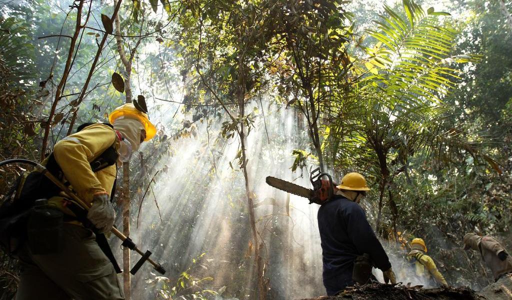 Tomarán medidas para detener la deforestación en la Amazonía