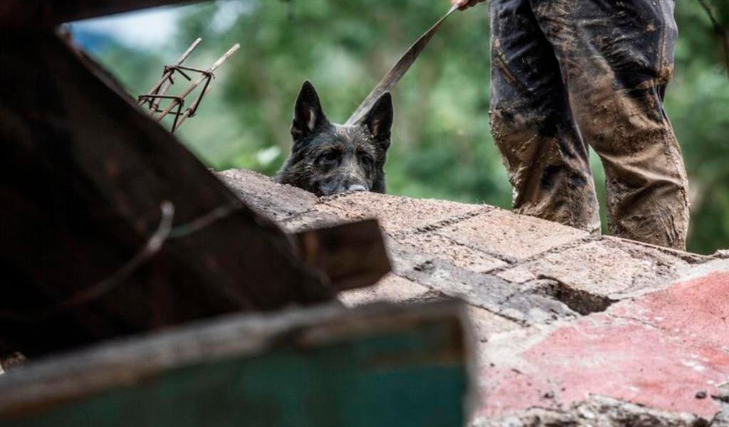 Perros auxilian en búsqueda de víctimas de 'Eta' en Guatemala