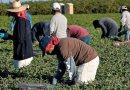 Autorizan trabajadores extranjeros temporales