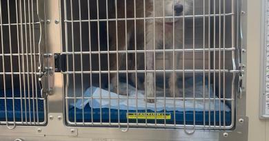 Rescatan a perrita herida en la estación del Metro Candelaria