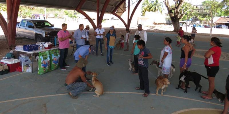 Buscan crear alerta Amber para mascotas en Quintana Roo