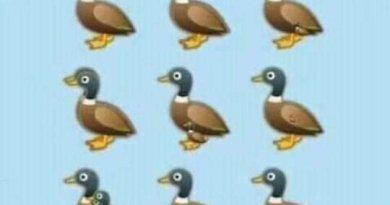 Reto viral: ¿Cuántos patos puedes ver en la imagen?