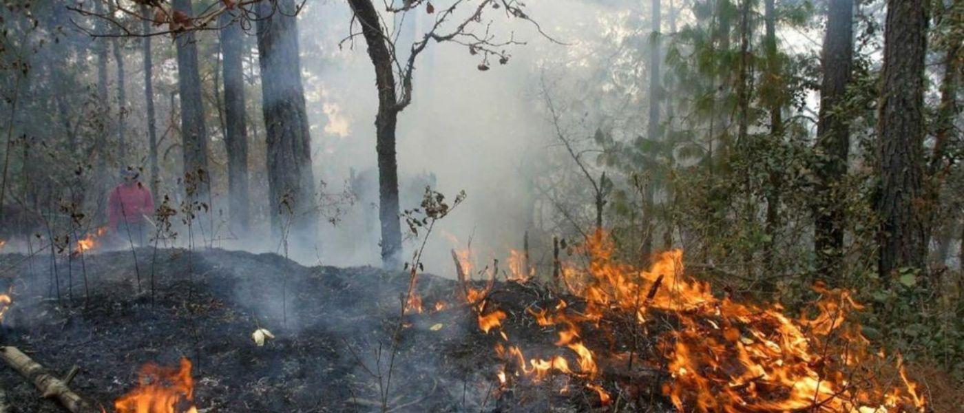 Quintana Roo se prepara para temporada de incendios forestales