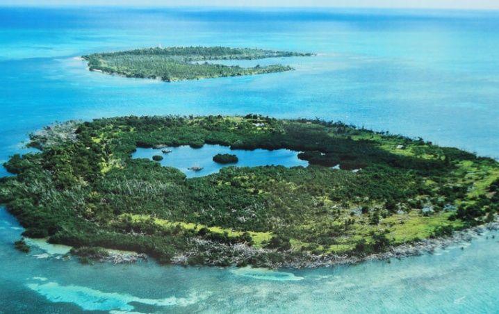 Peligran flora y fauna marina de Banco Chinchorro por recorte en la Conanp