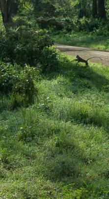 025 safari JP 1