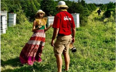 The secret life of bees & an orange blossom Madeleine recipe
