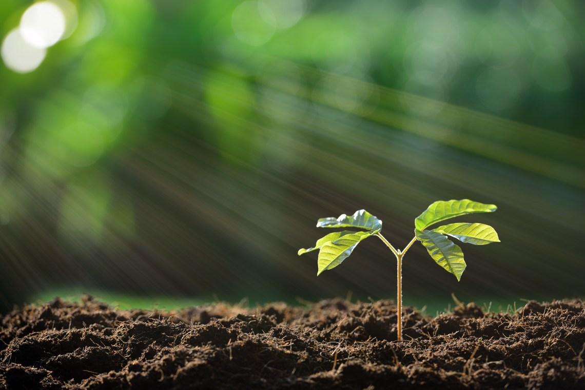 Start-ups, growth