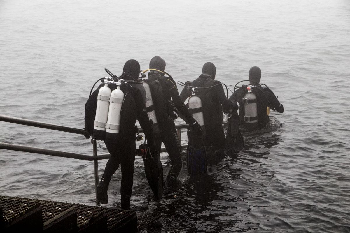 duikers zeelandbrug zeeland fotografie