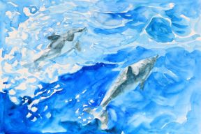 Dolphins_lores_IMG_3536