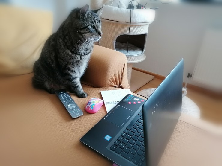 Katze sitzt vor dem Laptop auf dem Sofa. Sie bestellt neues Futter