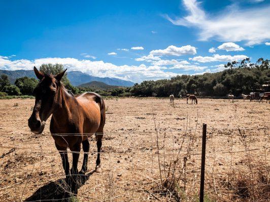 Reiten auf Korsika