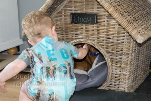 Jayden 19 maanden oud dreumes peuter - Franky die Teckel voeren hond