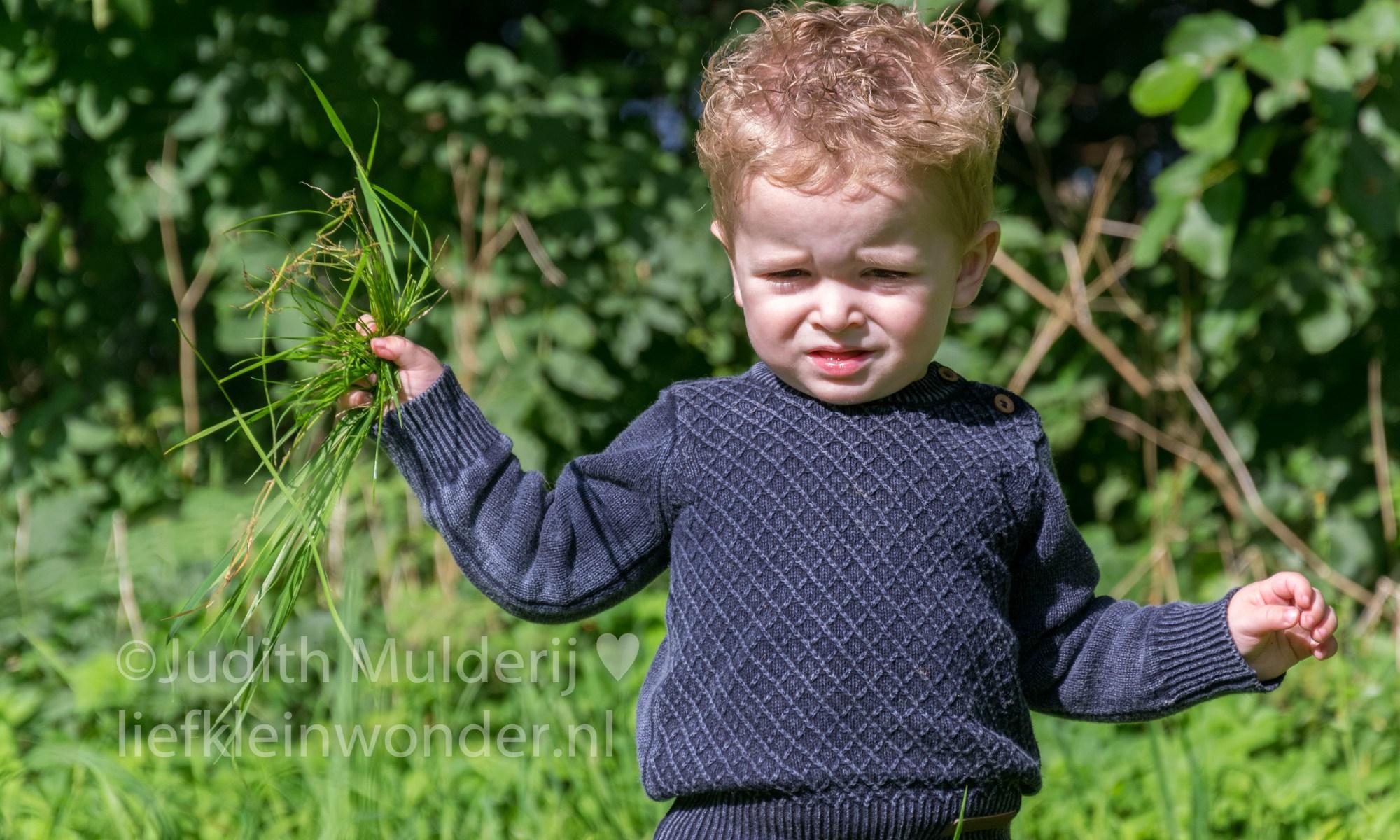 Jayden 20 maanden en 2 weken oud dreumes peuter mamablog - wandelen en fotoshoot in het bos besjes en gras plukken