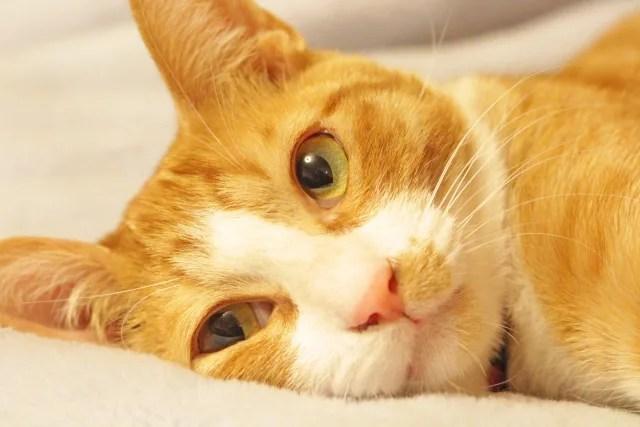 №116-2 クリスマス企画!猫好き男女限定ミニパーティーPart.2