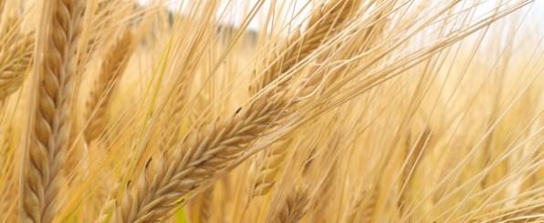 スーパー穀物キヌアの知られざる効能