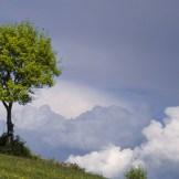 【心理テスト】描きかけの木