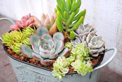 忙しい人こそ緑のある生活を!らくちん可愛い多肉植物のすすめ