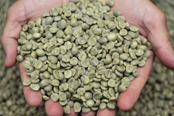 グリーン コーヒー 豆