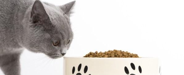 猫が、ご飯を食べない時の対策方法