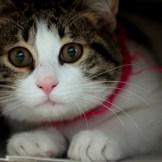 猫のオススメフード-ランキング