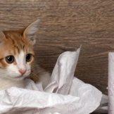 猫のしつけ~遊ばせ方とおすすめのおもちゃ~