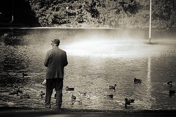 Een oude man voert de eendjes in het Valkenbergpark
