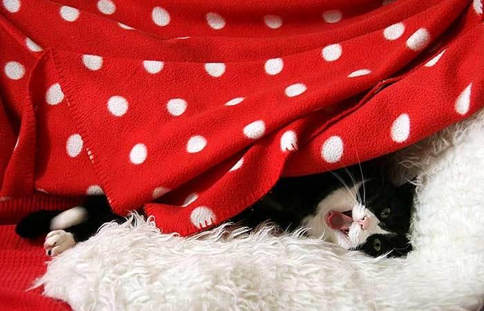 Geeuwende kat, een kort gedichtje