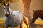 Paarden in het ochtendlicht